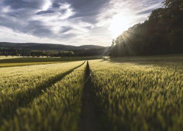 Provincia de Alberta Programa para el sector agroalimentario